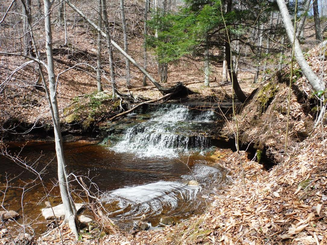 Hike Planned in Loyalsock State Forest