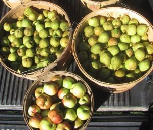 pears in truck