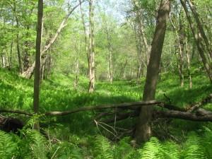 vosburg-forest